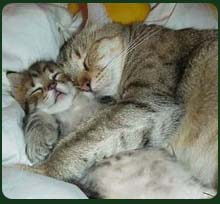 Cat hug in sleep